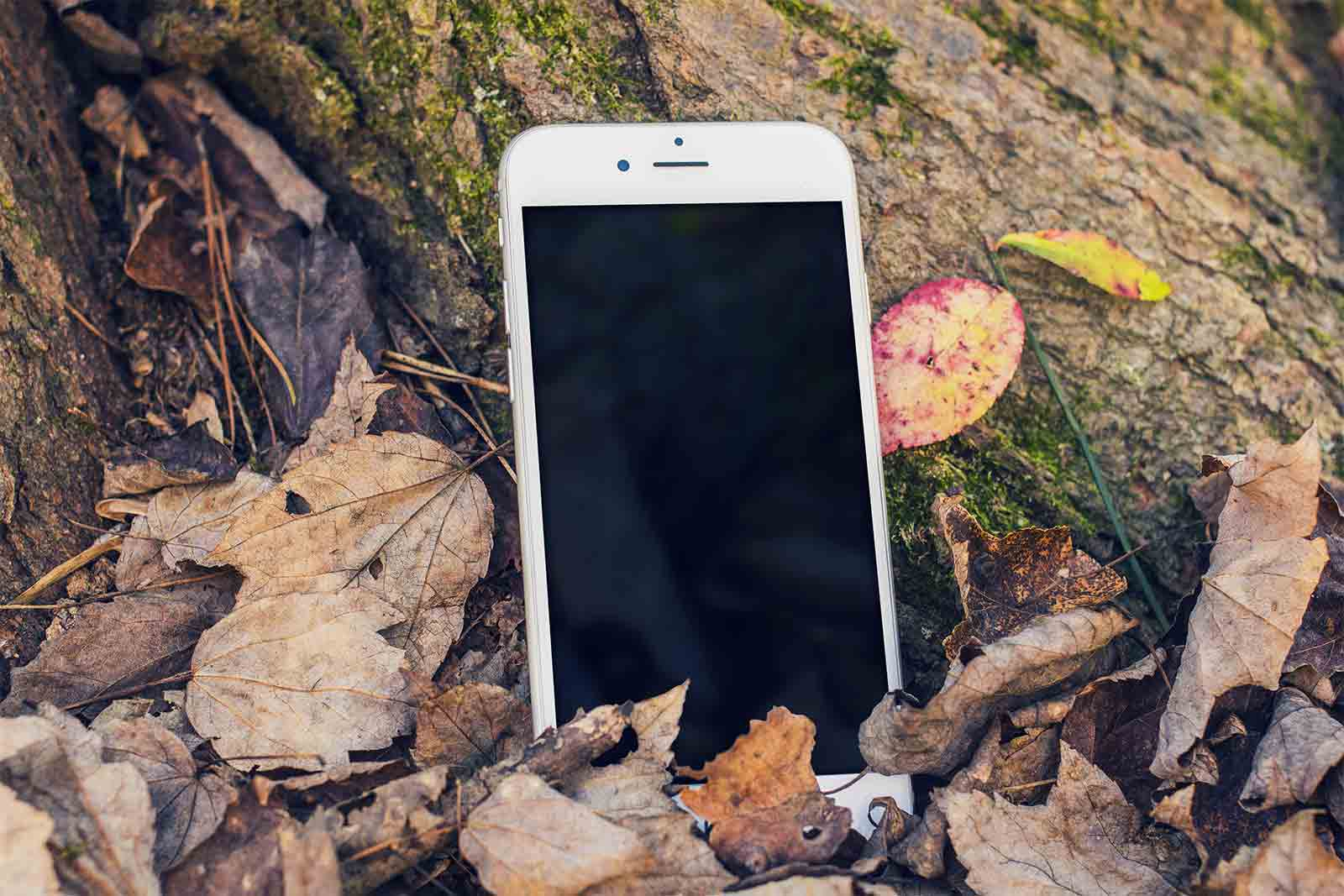 iPhone in Forest Mockup